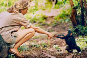 An interesting (and imaginary) talk to Jane Goodall